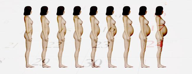 Какие бывают размеры живота у беременных